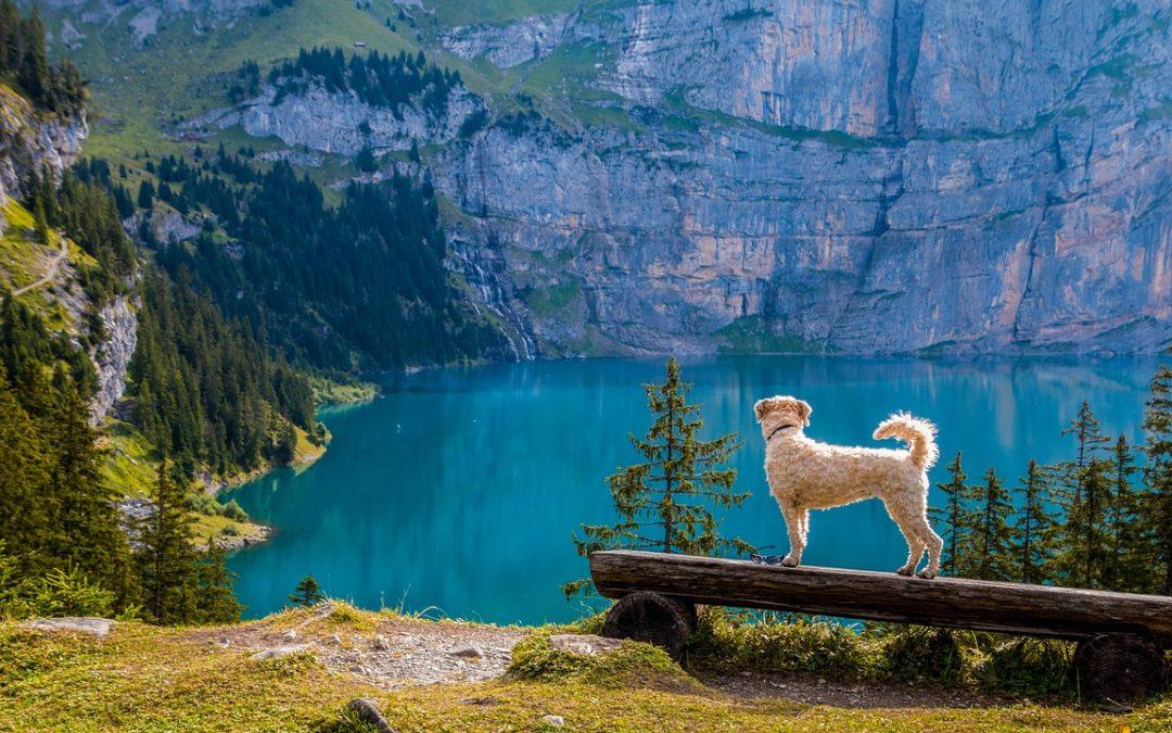 Dogs Overlooking Lake